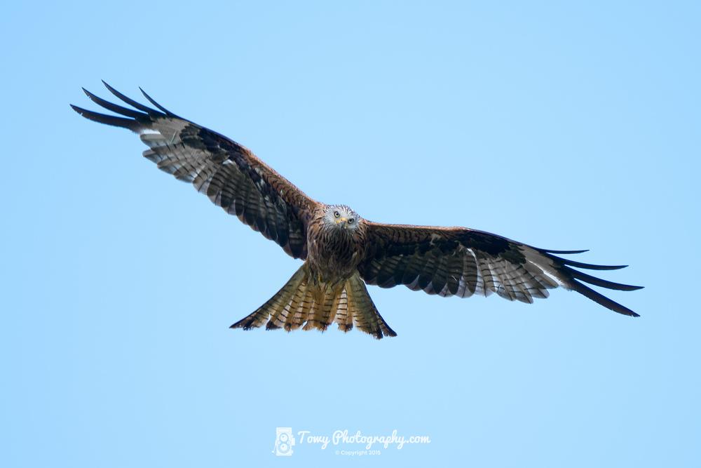 20150725_Wildlife_Birds-3-2-Edit-2-2.jpg