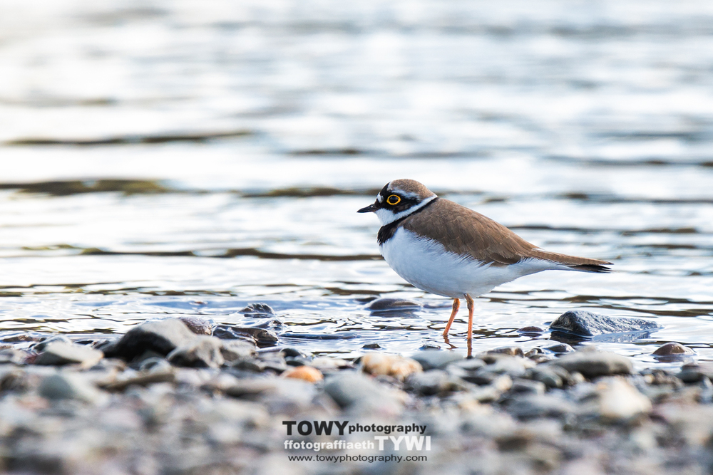20150404_Wildlife_Birds-106-Edit-Edit.jpg