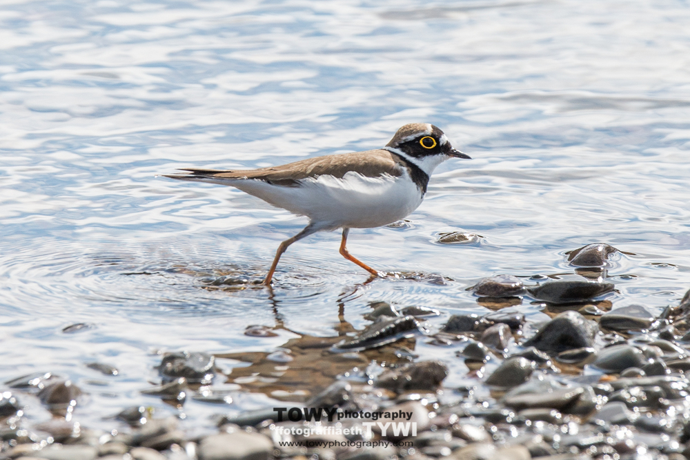 20150404_Wildlife_Birds-151-Edit.jpg