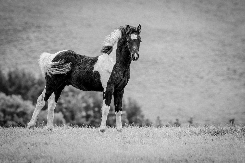20140830_landscape_blackmountains_pony.jpg