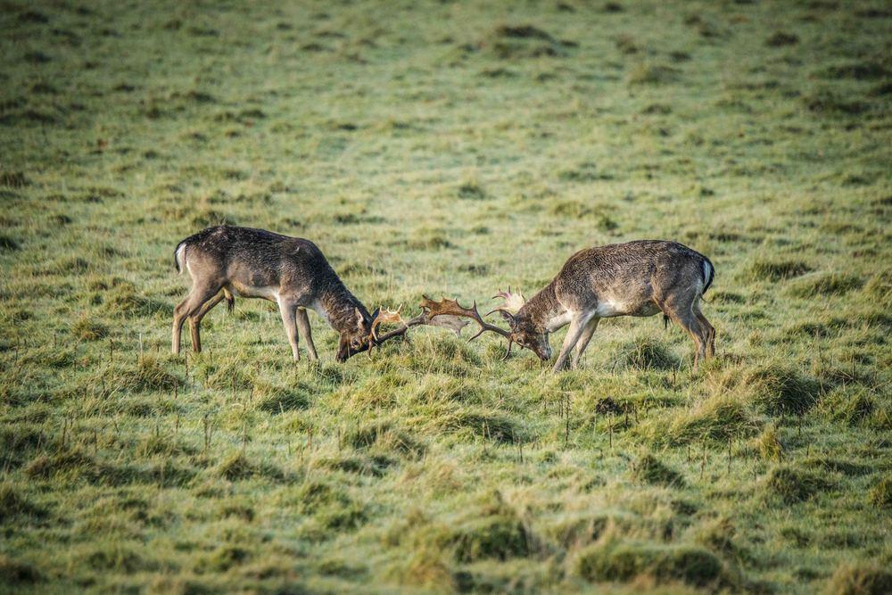 20141115_Landscape_Deer-6.jpg