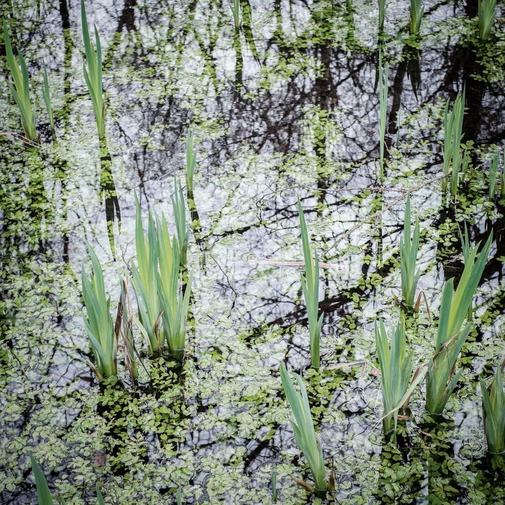 20160216_Landscape_Dinefwr-1-2.jpg