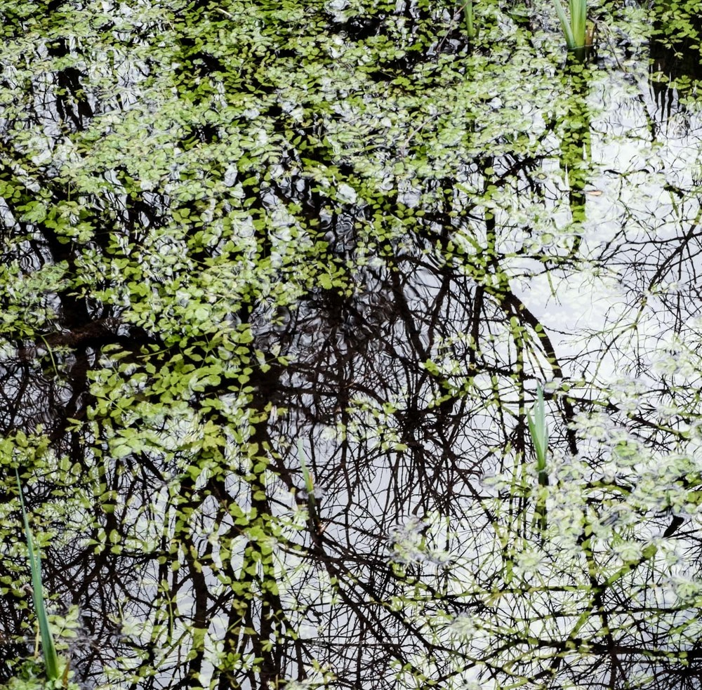 20160216_Landscape_Dinefwr-3.jpg