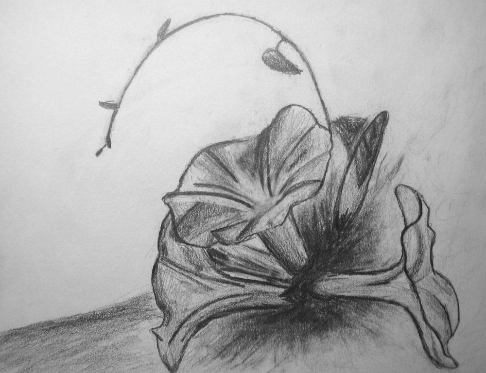 Flowers, Pencil, 2009