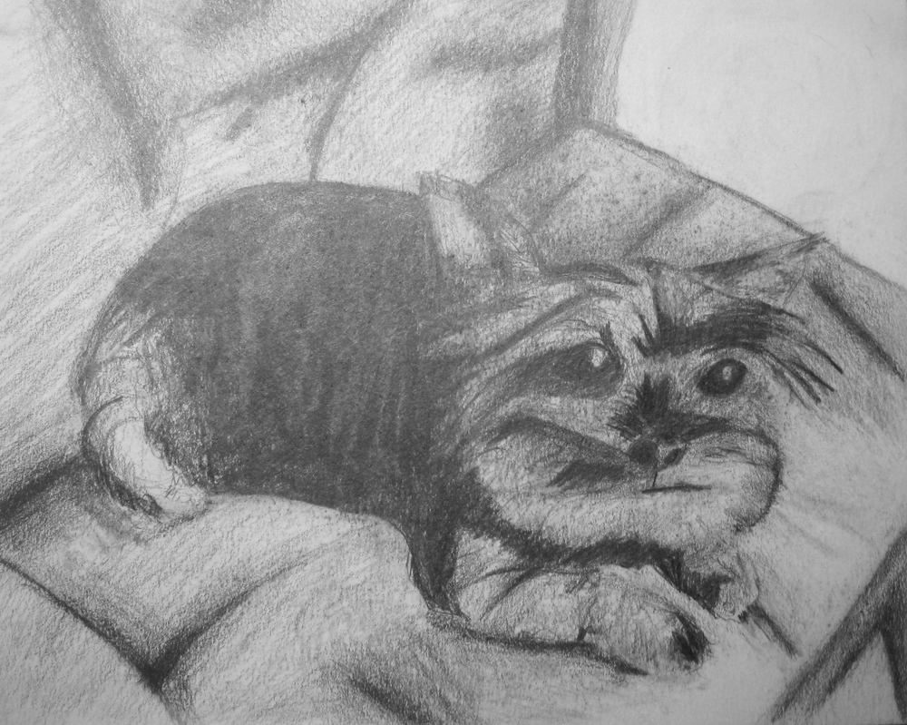 Portrait, Pencil, 2009