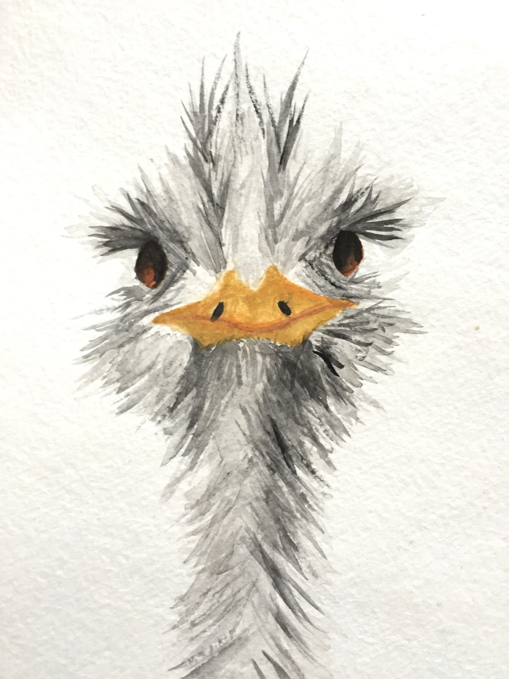 Ostrich, Watercolor & Ink, 2013