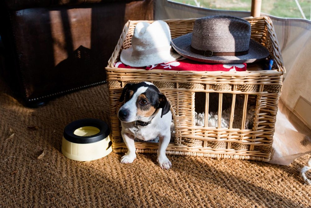 Small dog / hat stand at wedding by  Babb Photo