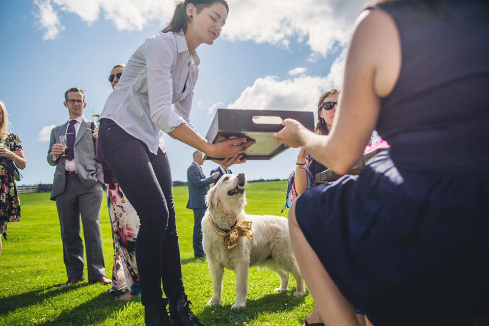 'Can I haz canapés' dog at wedding by  Lifeline Photography