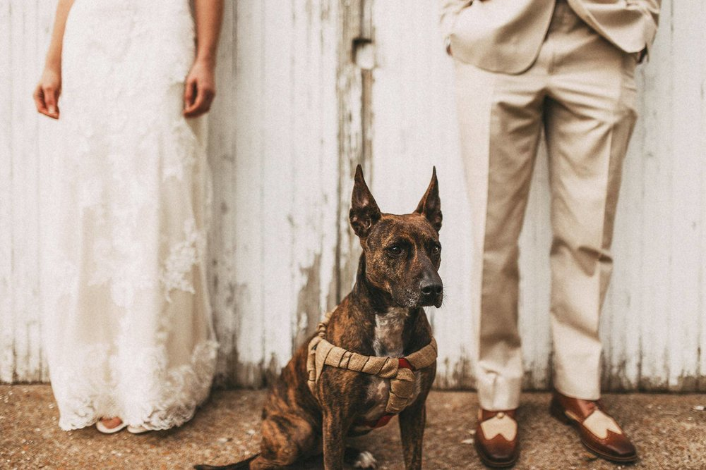 'Majestic doggy wedding portrait (with human backdrop)' by  Jacob Loafman