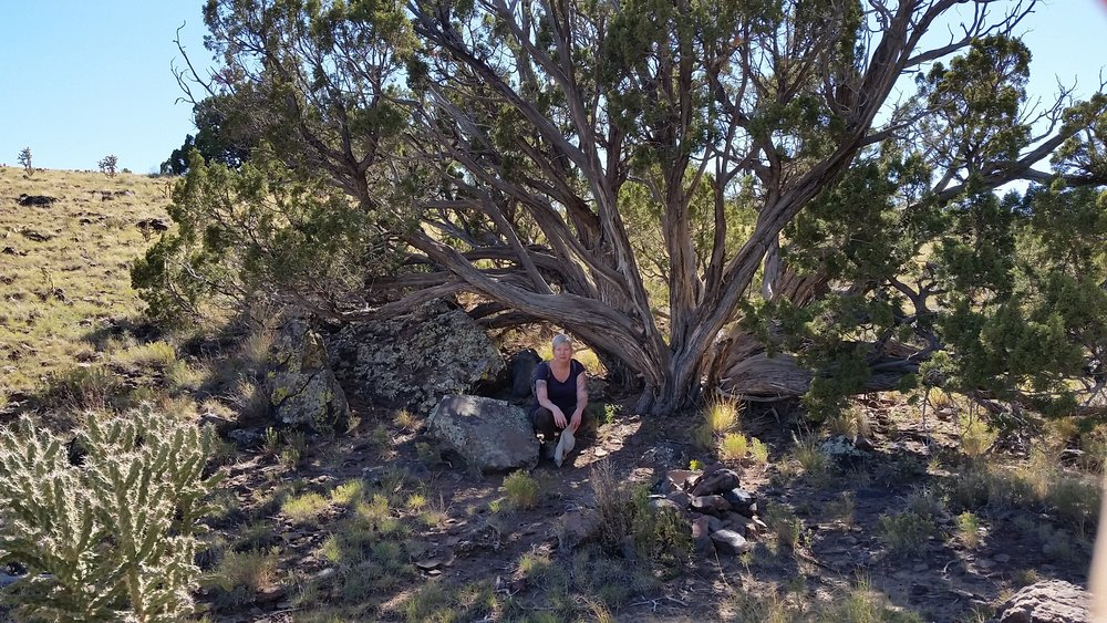 A sprawling, ancient juniper, me seated in front.  This tree may have been living before the arrival of the Europeans.