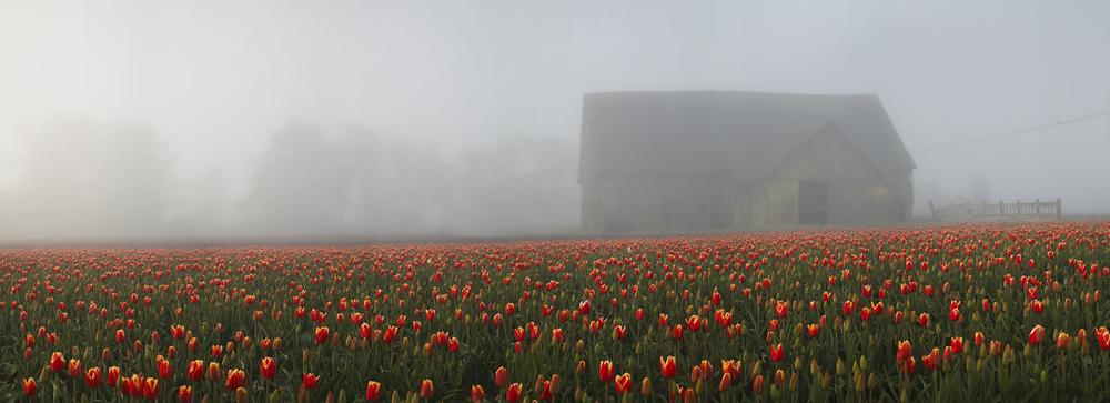 Tulip_Pano-2178-cropped.jpg