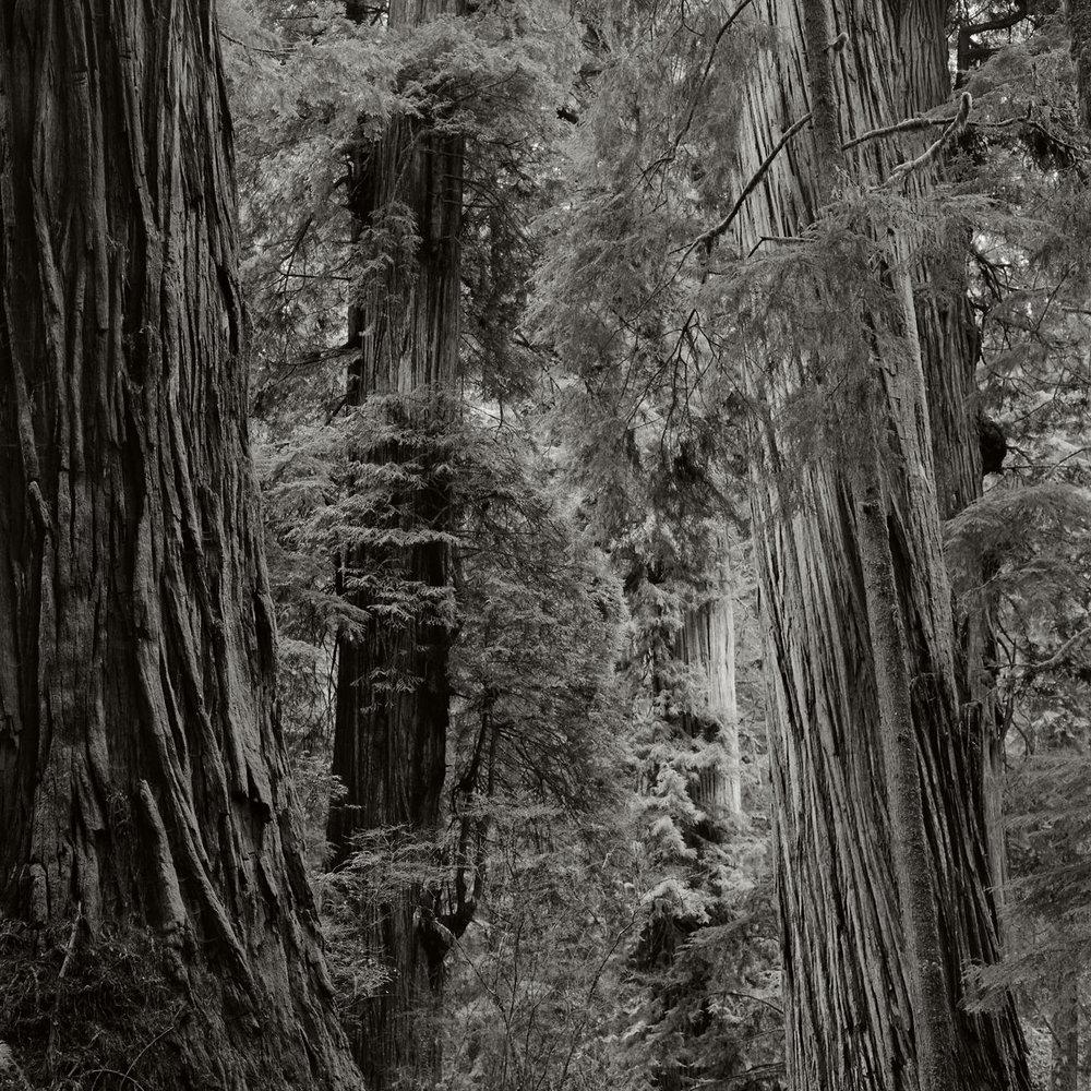 JS_Redwood_001.jpg