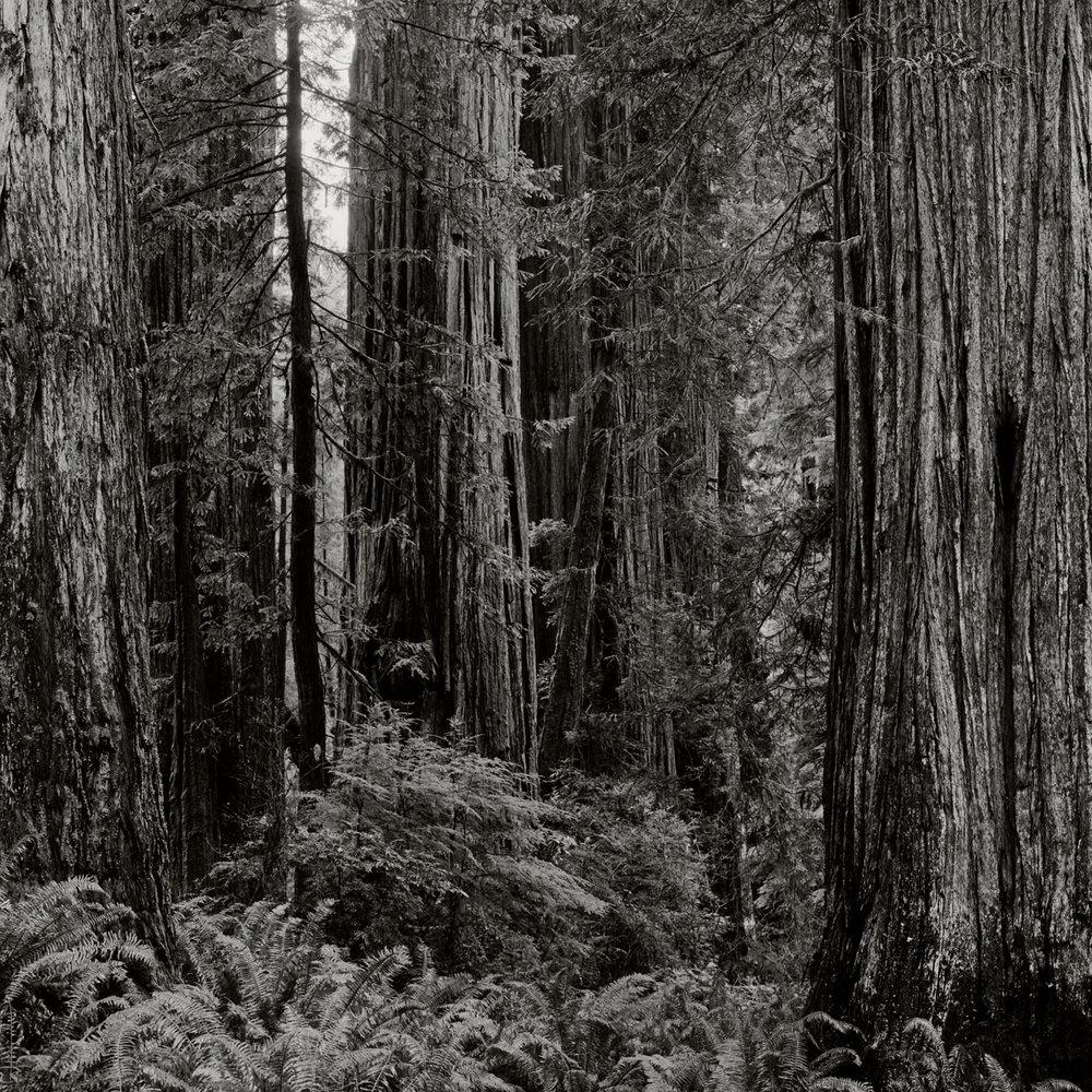 JS_Redwood_002.jpg