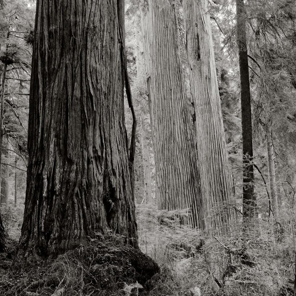 JS_Redwood_007.jpg