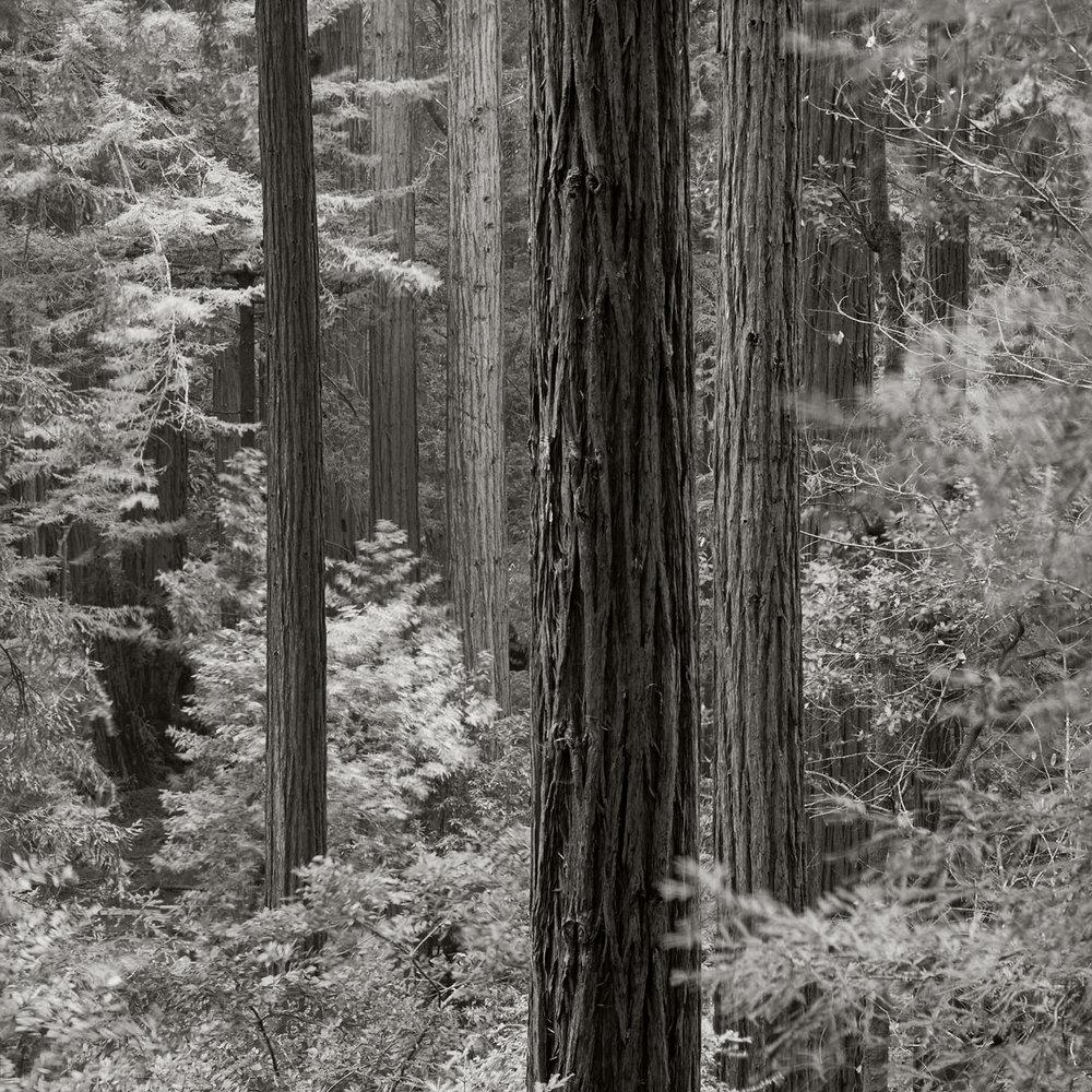 Muir-Woods_01003.jpg