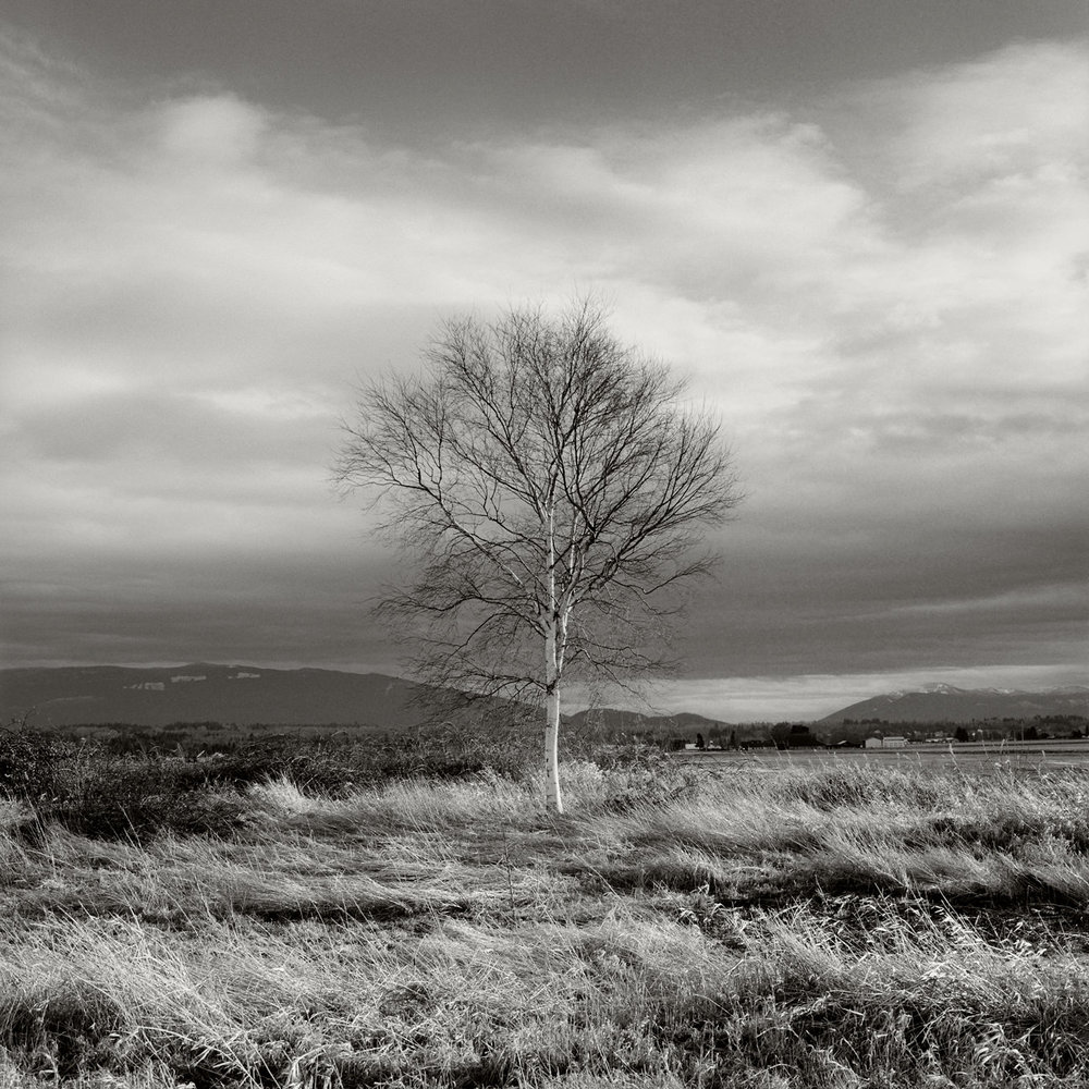 Bellingham_Tree_003.jpg