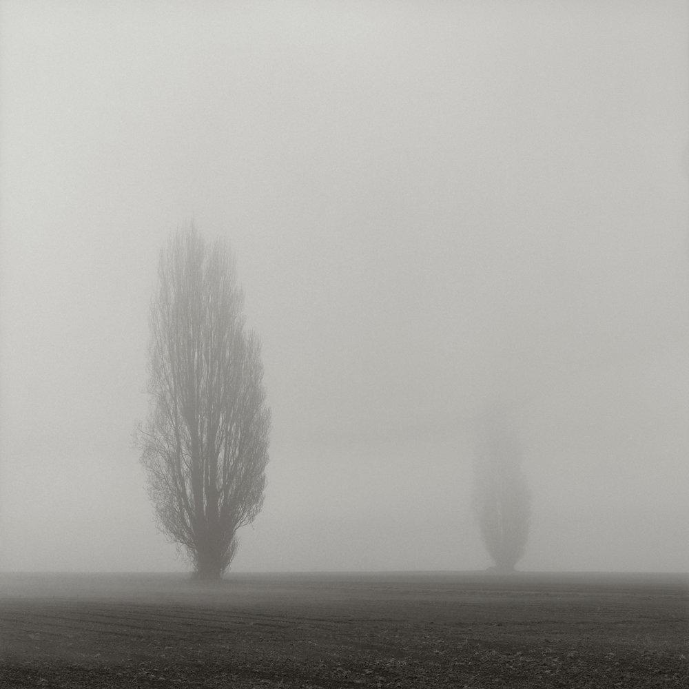Skagit_Trees_09013.jpg