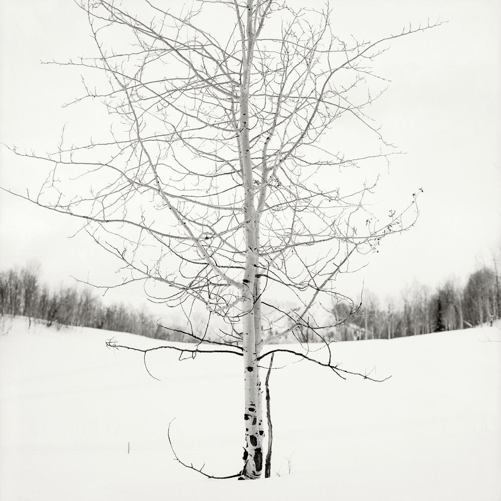 Sundance_Tree_05017.jpg