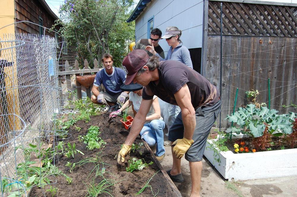 16 Edible garden 1.JPG