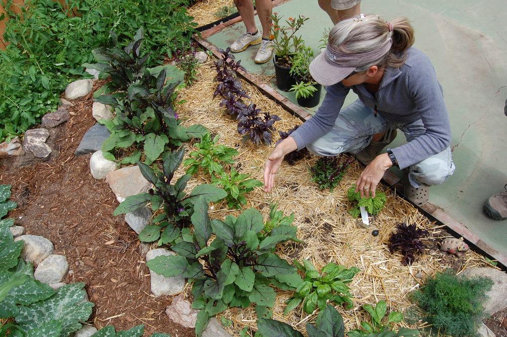 16 Edible garden2.JPG