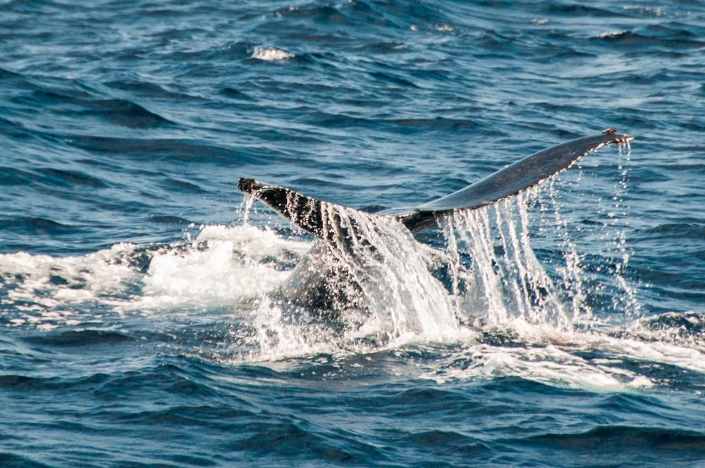 Whale Watching Laguna Beach