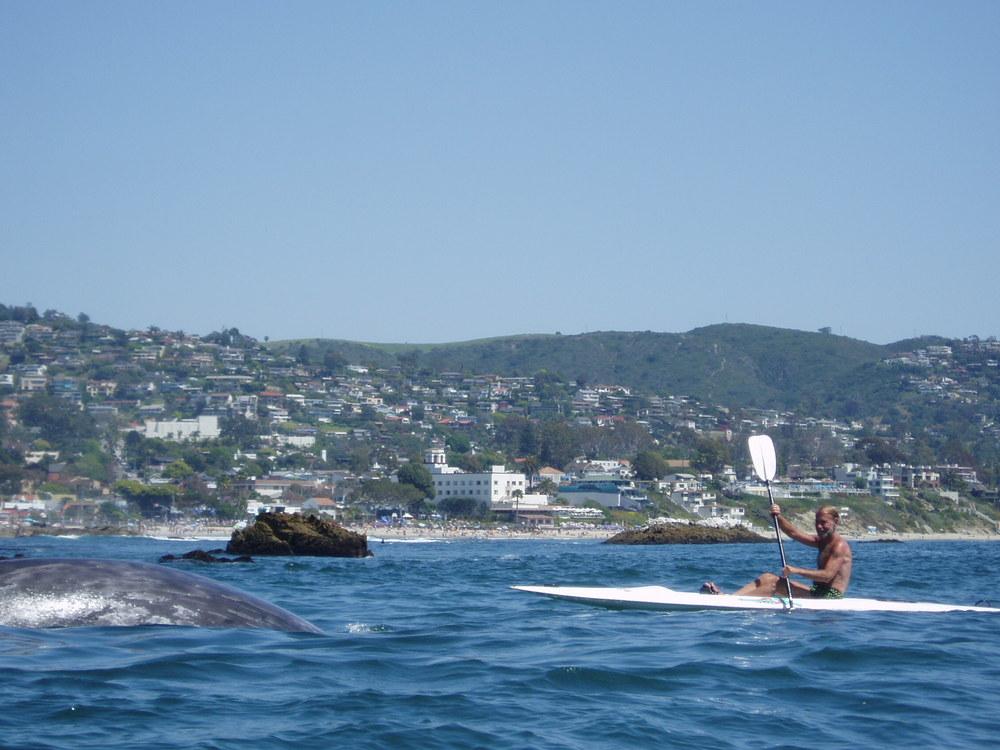 whales 021.jpg