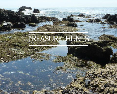 http://www.lavidalaguna.com/treasurehunts-1