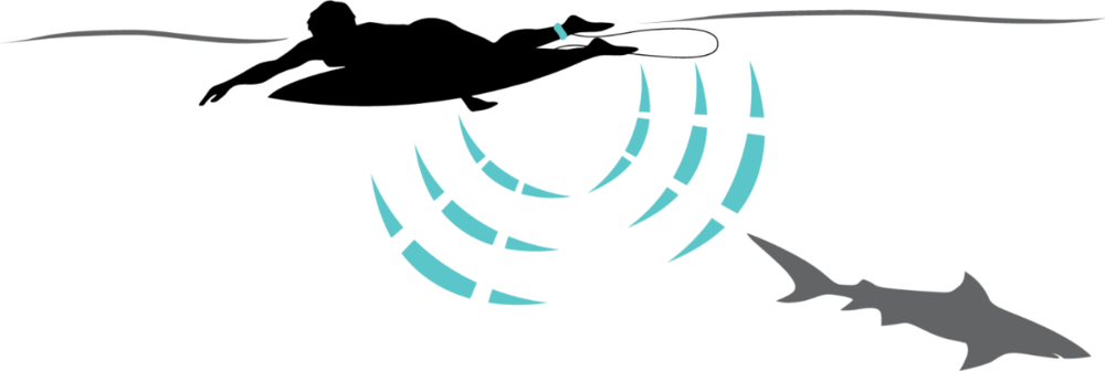 Shark-Leash-Diagram-Web-BIG.png