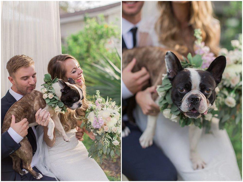 Wedding Puppy - Ducky - cutest French Bulldog