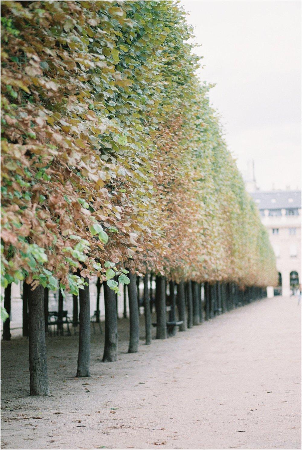 Paris Film Scans Canon 1V Fuji400_0029.jpg