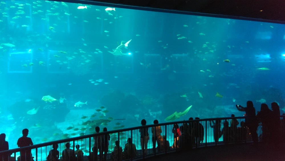 "the ""imax"" aquarium with manta rays."