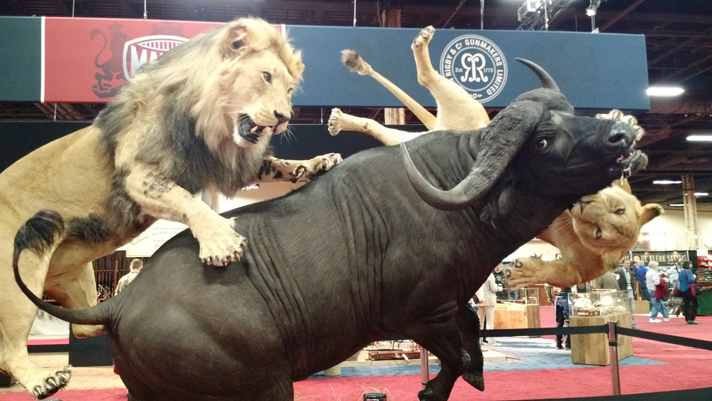 DAY 1 TRADESHOW SCI TAXIDERMY LION CAPE BUFFALO