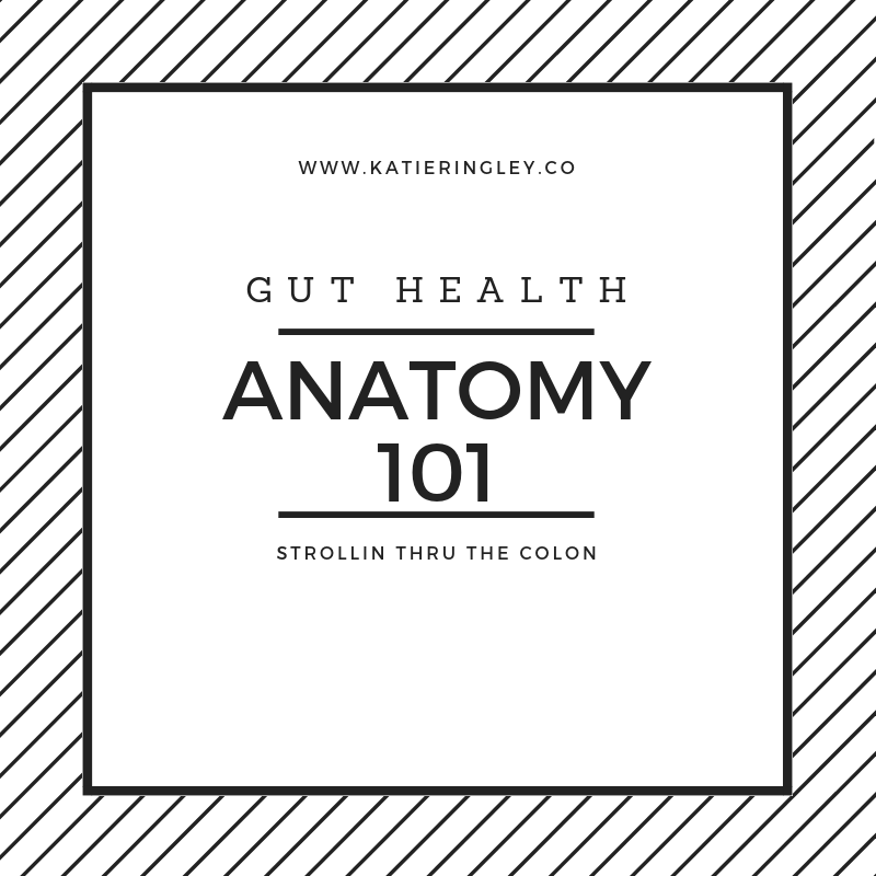 guthealthanatomy