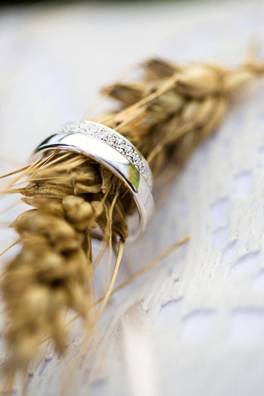Alliances sur un épi de blé