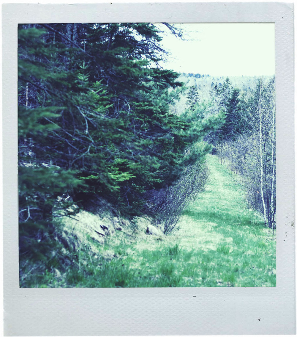 polaroid_logging-road1.jpg