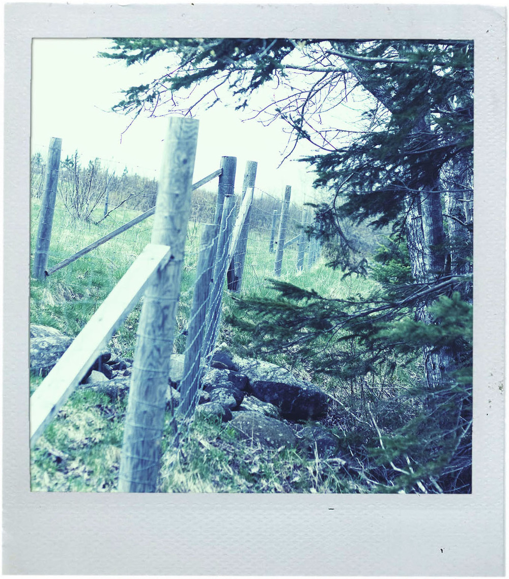 polaroid_field3.jpg