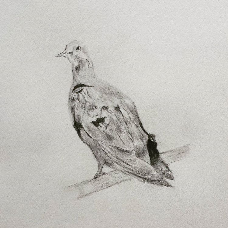 71 - RIP Passenger Pigeons