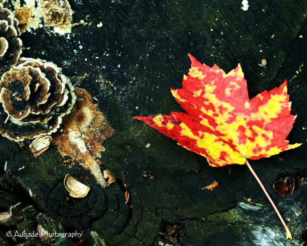 A Single Leaf.jpg