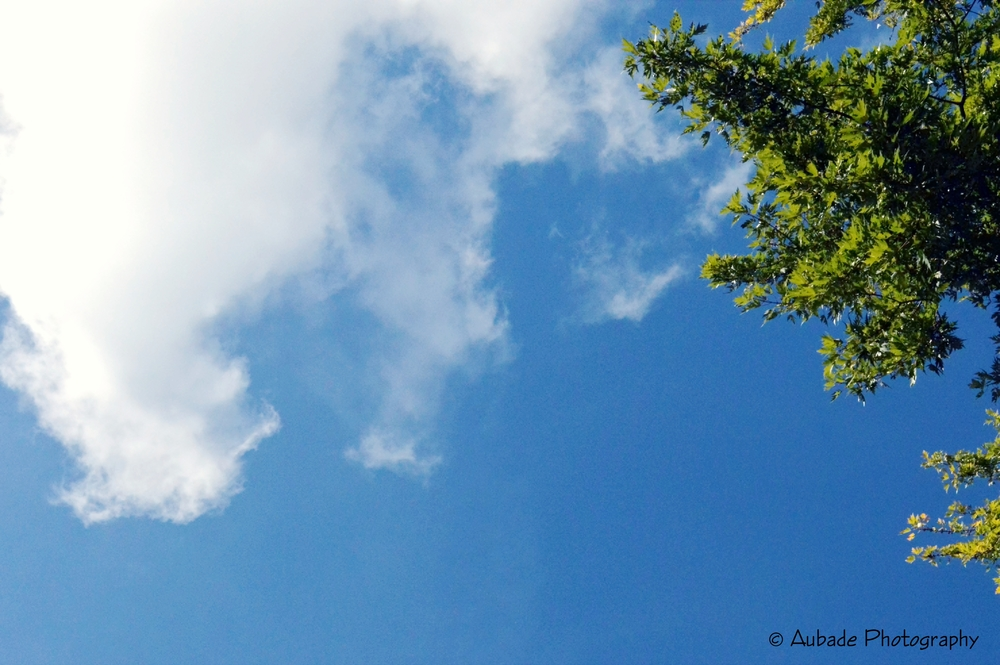The Sky.jpg
