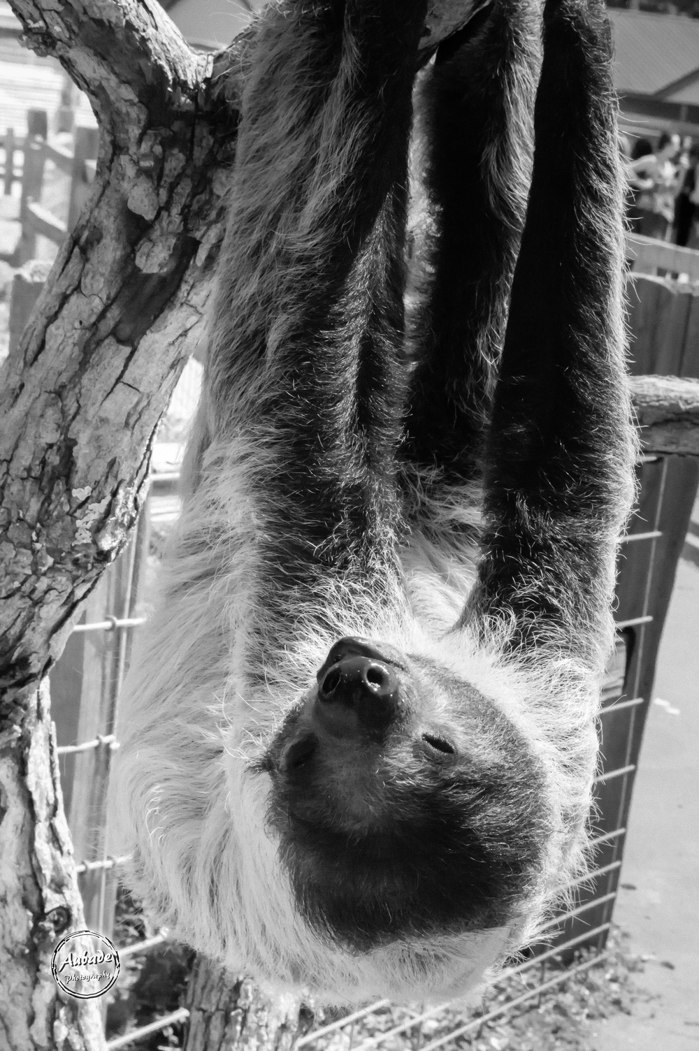#Aubade Photography #Wisconsin Photographer #Animal Sanctuary #Two toed sloth