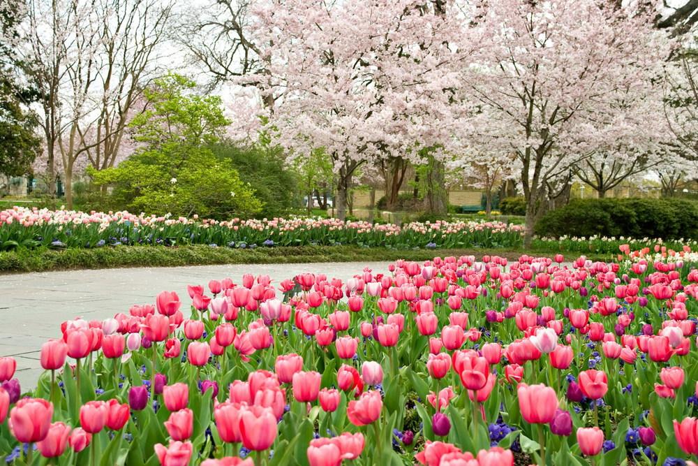 dallas arboretum spring