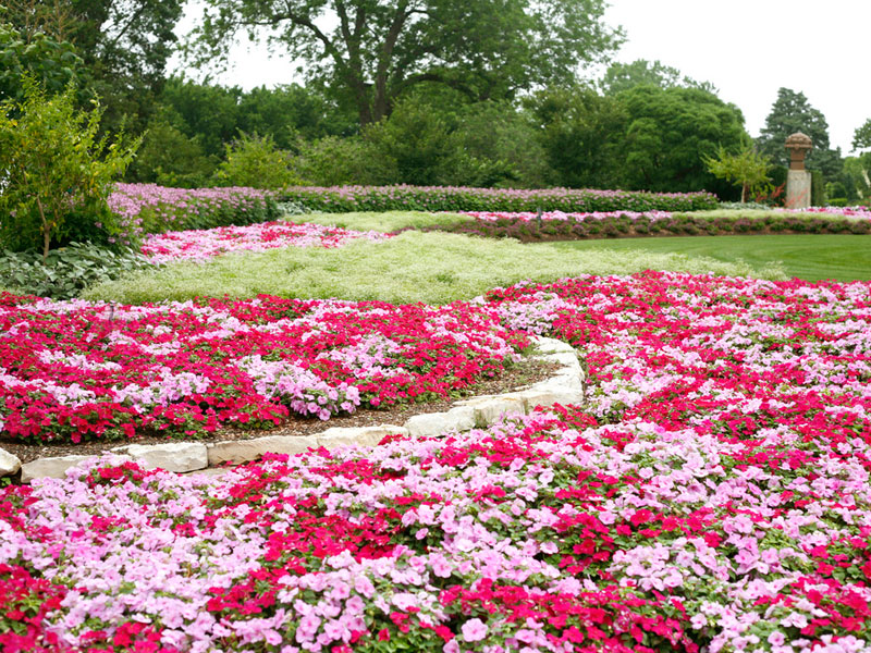 dallas arboretum in the summer