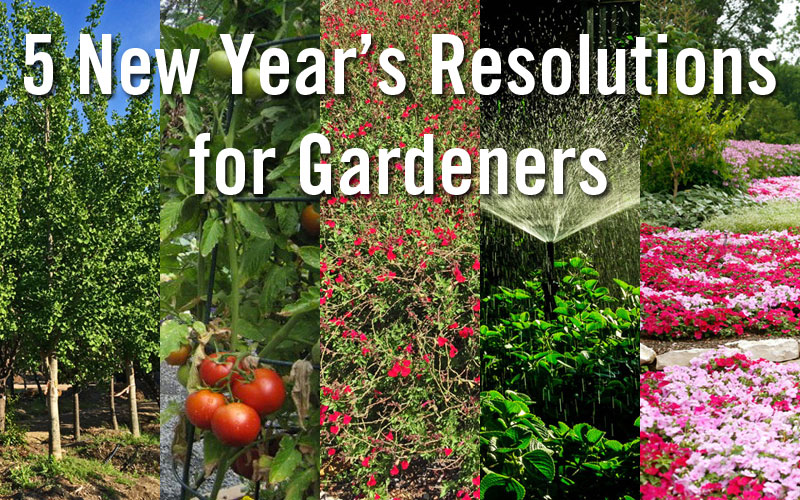 new years resolutions for gardeners