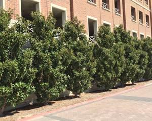 Plants For Dallas Your Source For The Best Landscape Plant