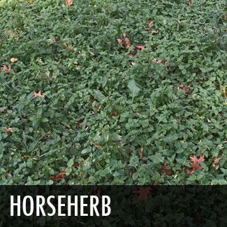 horseherb.jpg