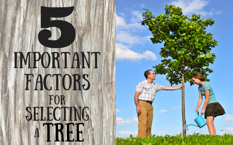 5 important factors for selecting a tree