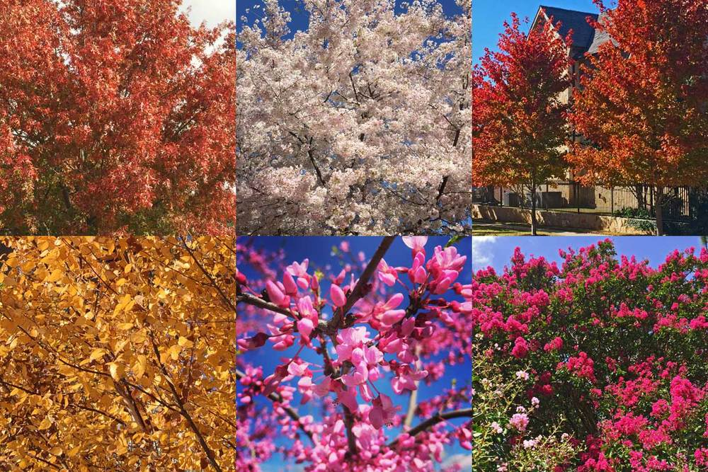 spring summer and fall color