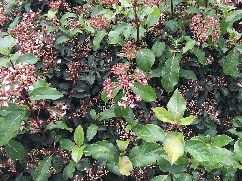 viburnum-spring-bouquet