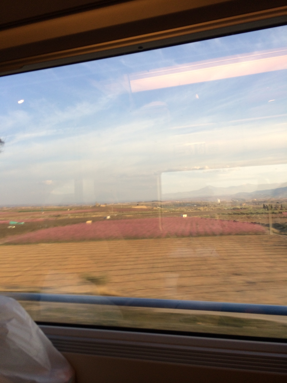 Lavender Fields on the train ride to Barcelona from Seville