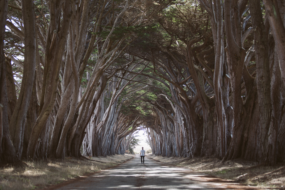 This tree tunnel was amazing.  The other tourists were confused why I was standing 150' from my camera and tripod.